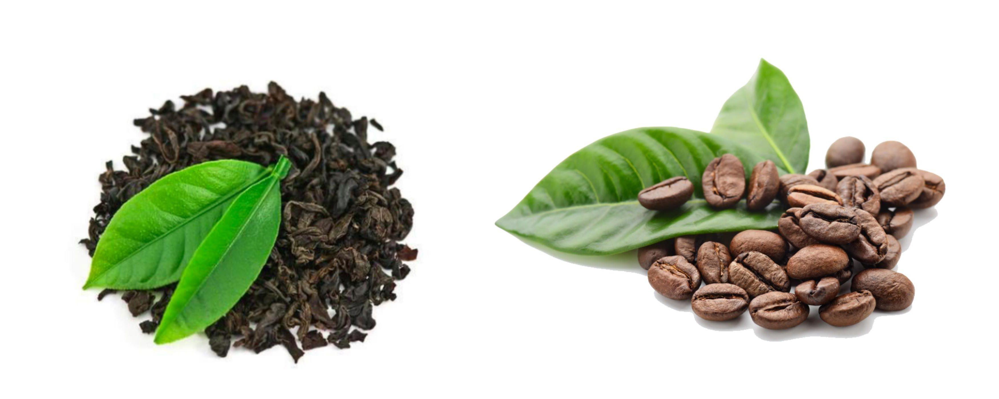 Te och kaffe-guiden